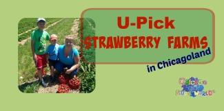 u-pick strawberry